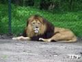 Serengeti-Park-18-05-2014-(14)