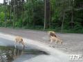 Serengeti-Park-18-05-2014-(7)