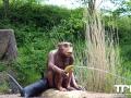 Serengeti-Park-18-05-2014-(96)