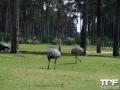 Serengeti-Park-18-05-2014