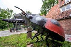 Insecten-Boerderij-5