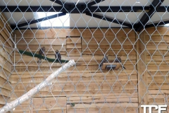 nieuwe-roofvogels--(2)