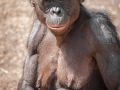 PL_Bonobo7aug17_JonasVerhulst-2