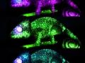 Kameleon-verschillende-kleuren