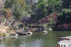 Disneyland-resort-Anaheim-98