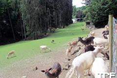 Eifelpark-(3)