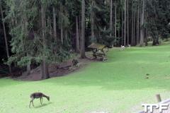Eifelpark-(4)