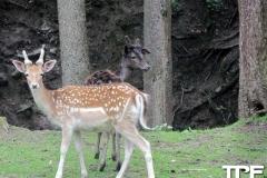 Eifelpark-(5)