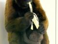 Pasgeboren-wolaap