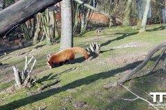 Gaia-zoo-17