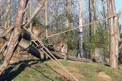 Gaia-zoo-2