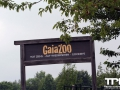 Gaiazoo---Benny