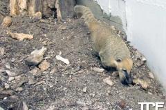 Givskud-zoo-(10)