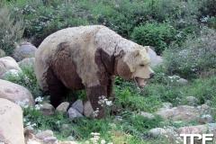 Givskud-zoo-(100)