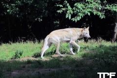 Givskud-zoo-(108)