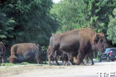 Givskud-zoo-(18)