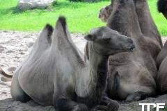 Givskud-zoo-(2)