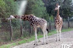 Givskud-zoo-(20)