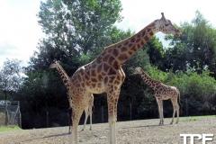 Givskud-zoo-(21)
