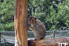 Givskud-zoo-(29)