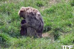 Givskud-zoo-(30)