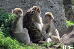 Givskud-zoo-(31)