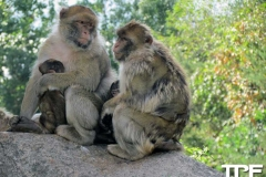Givskud-zoo-(33)