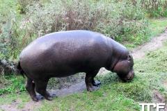 Givskud-zoo-(36)