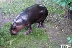 Givskud-zoo-(37)
