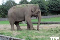 Givskud-zoo-(4)