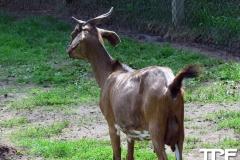 Givskud-zoo-(42)