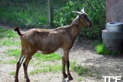 Givskud-zoo-(43)