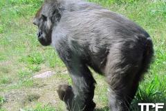Givskud-zoo-(45)