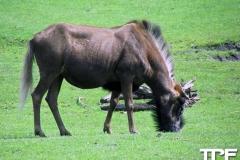 Givskud-zoo-(53)