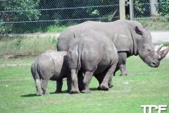 Givskud-zoo-(55)