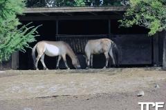 Givskud-zoo-(6)