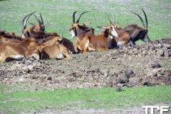 Givskud-zoo-(60)