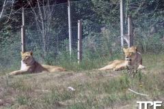 Givskud-zoo-(62)