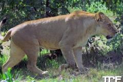 Givskud-zoo-(63)