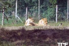 Givskud-zoo-(64)