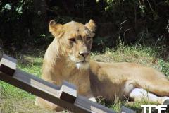 Givskud-zoo-(67)