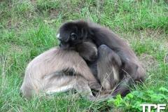 Givskud-zoo-(7)