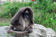Givskud-zoo-(8)