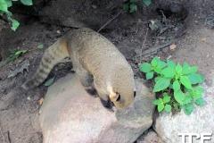 Givskud-zoo-(9)