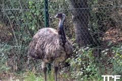 Givskud-zoo-(94)