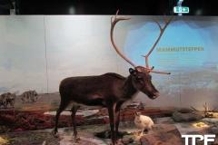 Givskud-zoo-(97)
