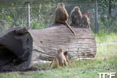 Knuthenborg-Safaripark-(10)