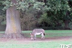Knuthenborg-Safaripark-(101)