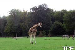 Knuthenborg-Safaripark-(17)