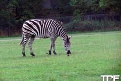 Knuthenborg-Safaripark-(18)